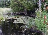 id: bt008 image: Tranquil-Pond,-base-of-Bruce-Peninsula.jpg